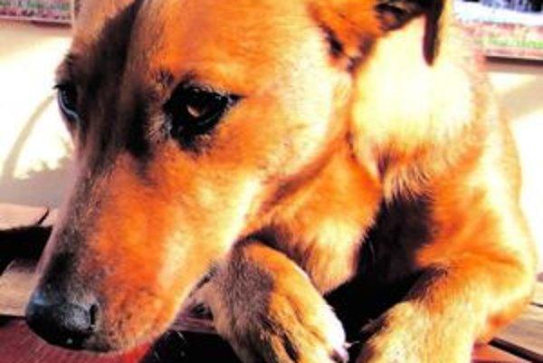 Evidujú 5231 psov. Nie všetci majitelia však psa na mestskom úrade prihlásili.