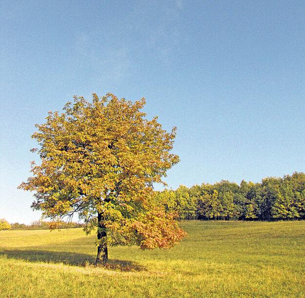 Stromy nájdeme v krajine ako krásne solitéry.