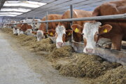 Kravičky zrejme ani len netušia, že okrem mlieka dávajú svojim chovateľom aj svetlo ateplo.