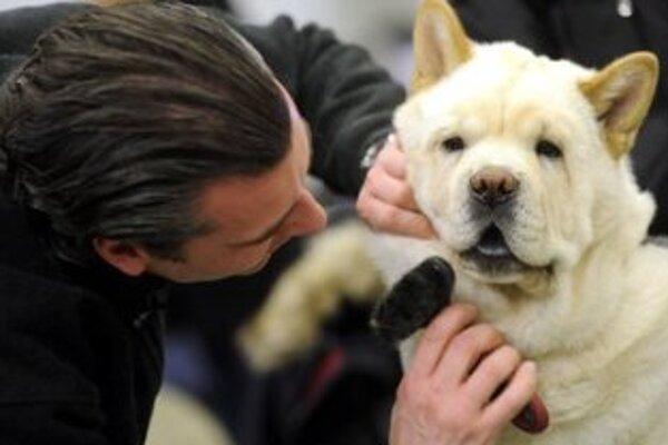 Na trenčianskom výstavisku sa konal štrnásty ročník medzinárodnej výstavy psov