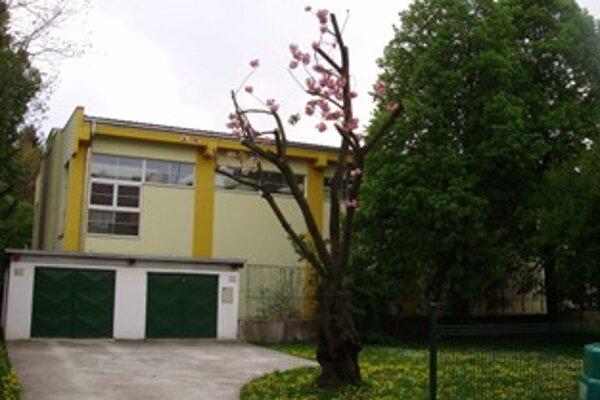 Orezaný strom po ozdravno-výchovnom reze.