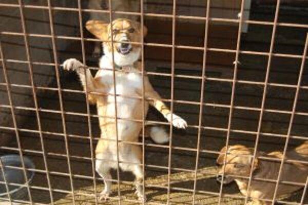 V útulku Nádej žije v súčasnosti cez päťdesiat psíkov.
