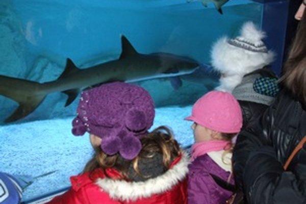Žraloky v obrovskom mobilnom akváriu. Morský biológ Fabrice Lesieur potešil touto výstavou najmä deti.