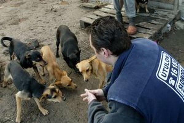 Premnožené psy sú často problémom nelegálnych osád.