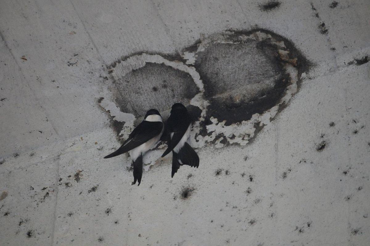 čierne vtáky video jeden smer Gay Sex príbehy