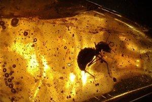 Mravec uväznený v jantári.