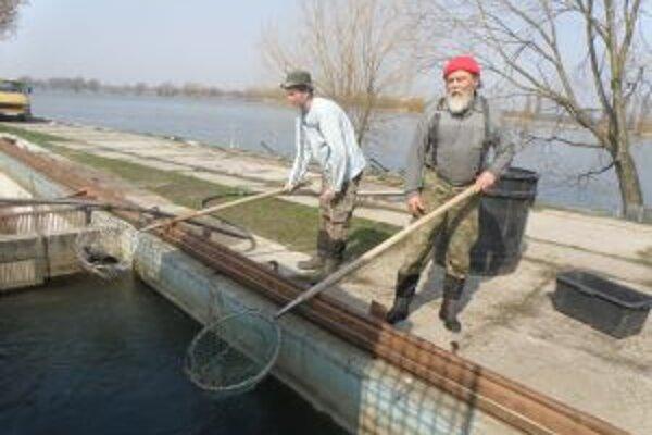 Rybárom pomôže mesto Skalica.