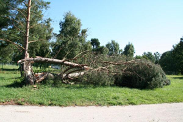 Niektoré stromy v parku ešte stále nie sú ošetrené, hrozí riziko úrazu.