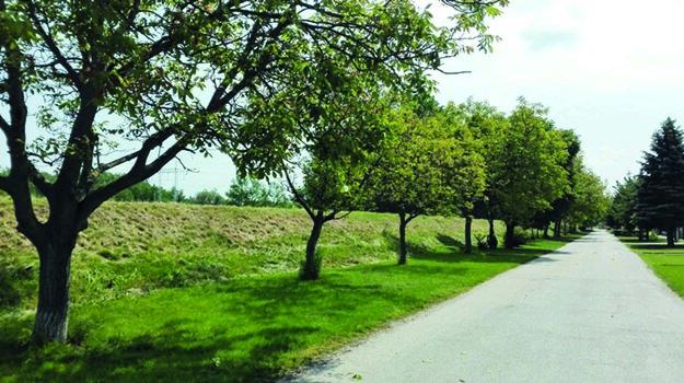 Vyrúbaných má byť približne 80 stromov.