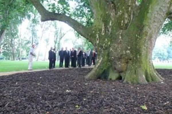 Na oficiálnom otvorení zrekonštruovaného parku si platan prezreli aj hostia. Aj politici boli pri ňom malí.
