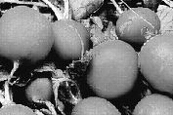 Reďkovku môžeme pestovať vo viacerých odrodách.