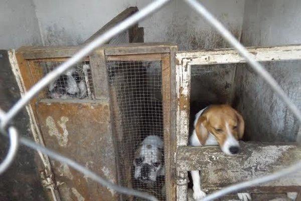 Množitelia zvieratá držia v katastrofálnych podmienkach. Legislatíva bez povinnej registrácie chovov je nedostatočná.