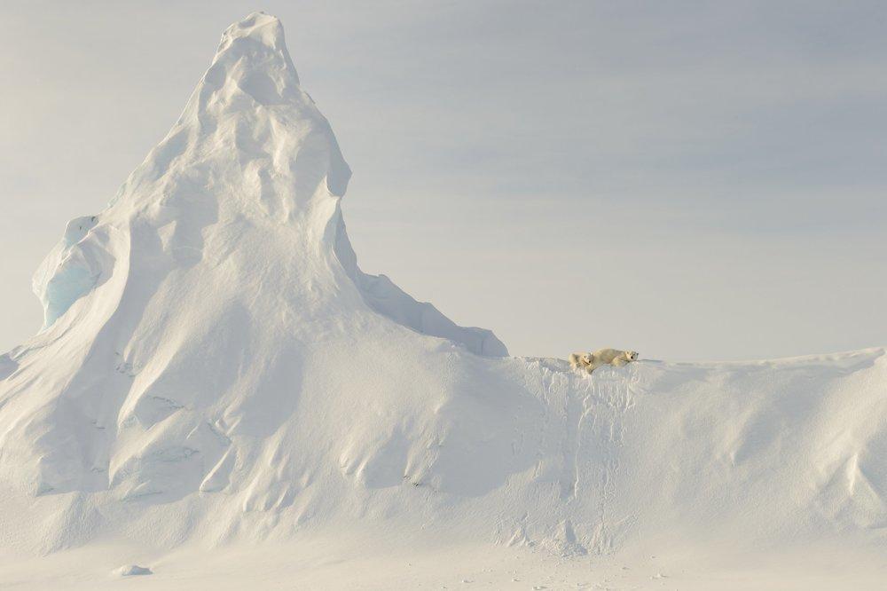 Čestné uznanie kategória Príroda. Medveď na ľadovci. Záber vznikol v Davisovej úžine   pri Baffinovom ostrove. Obrovské tvory sú maličké v porovnaní s nekonečnosťou ľadovca naokolo.