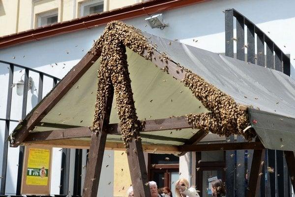 Roj na Poštovej. Vystrašení ľudia sa báli, že včely zaútočia.