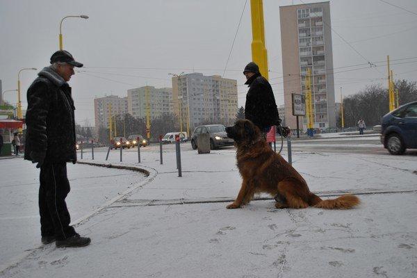 Prvý zimný sneh v Košiciach. Užíval si ho aj tento štvornohý fanúšik zimy.