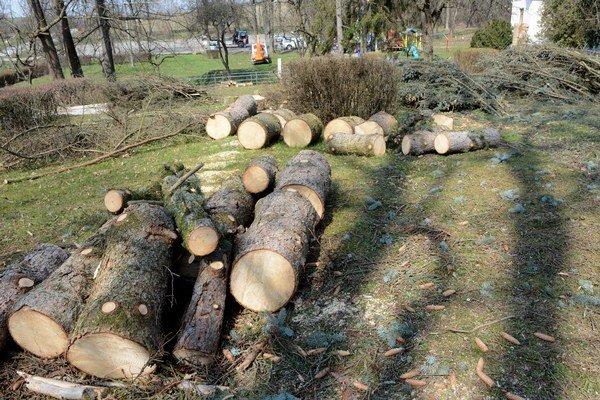 Vyrúbané stromy. Boli staré, ohrozovali ľudí.