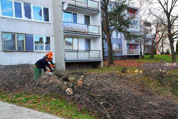 Pílenie stromov. Dreviny musia ustúpiť garážam.
