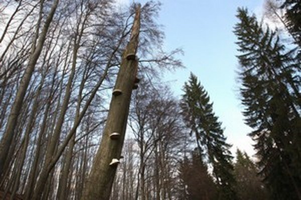 O lesy je veľký záujem.