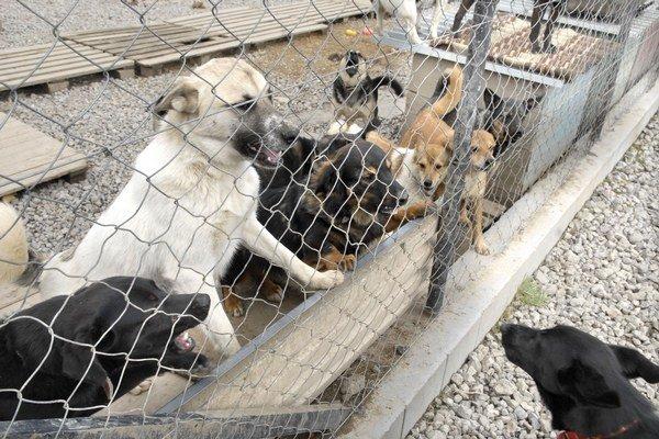 Opustených psov je veľa. Sú vďační za každú pomoc.
