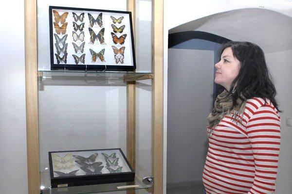 Naše i exotické. Rozmanité motýle nájdete v múzeu.