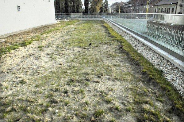 A už je po novej tráve. Závlahový systém striekal zle.