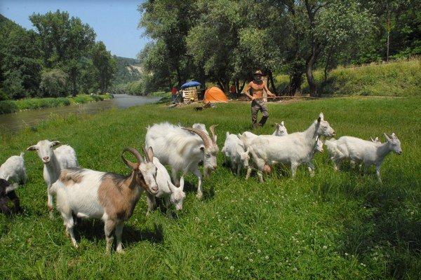 V lete choval kozy pri Hornáde, na jeseň si preňho  prišli kukláči.