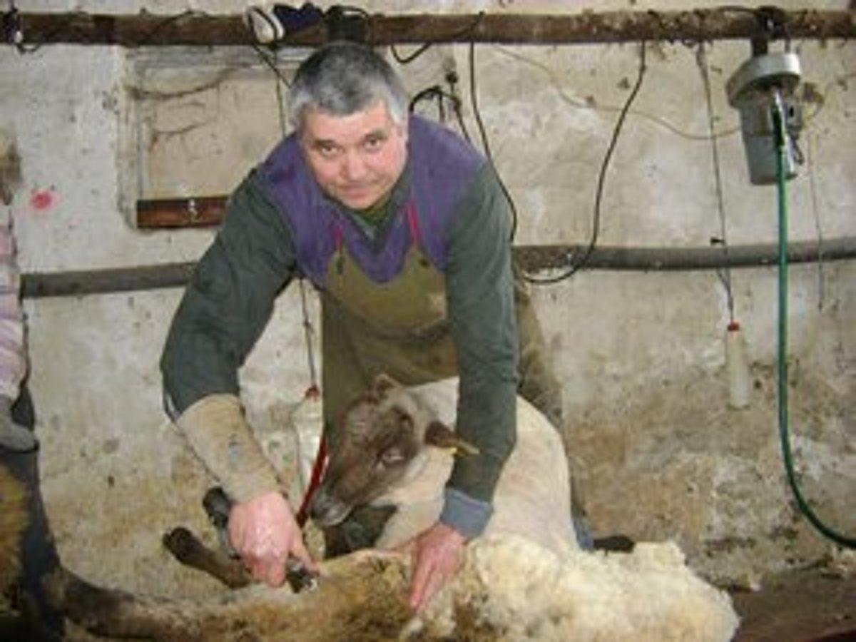 Hasič strihá ovce už tridsať rokov. Občas ho pohryzú - kosice.korzar ... 131d8fa5a6f