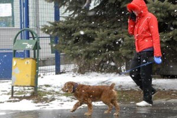 Každý pes musí byť evidovaný. Či naozaj aj je, zistíte na stránkach mestských častí.