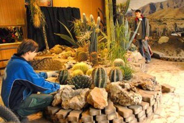 Výstava kaktusov. Krajina pichľavých zázrakov láka do botanickej záhrady.