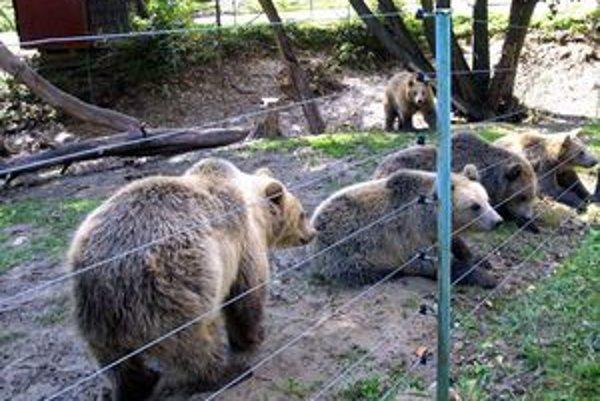 Päť malých macov urobilo v zoo pred desiatimi rokmi rozruch. Pätorčatá majú už desiate narodeniny. Jeden sa ich nedožil.