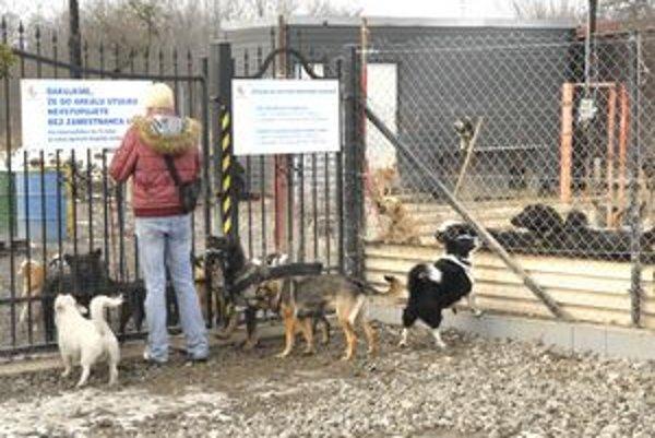 V útulku je takmer 150 psíkov. Potrebujú najmä lásku svojho pána.