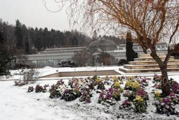 Zmena sa nechystá. Skleníky v botanickej záhrade už prežili veľa. Nové sú v nedohľadne.