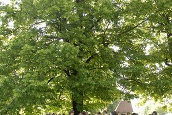 Padnúť má 163 stromov. Konanie o vydaní povolenia na ich výrub má pokračovať o dva mesiace.