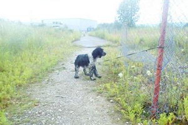 Na psíkovi boli viditeľné stopy, že trpel