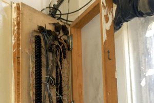 Netopiere dokážu vliezť aj do rozvodných skríň.