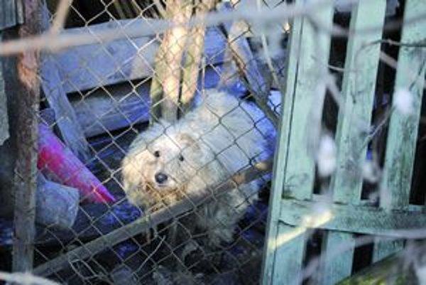 Jeden z obyvateľov, Tento psík obýval vo februári jeden z pozemkov na Textilnej ulici.