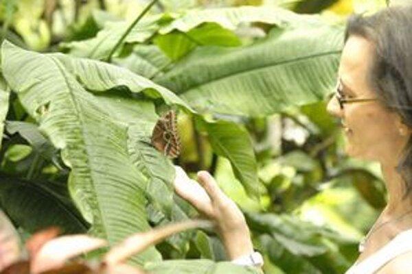 Maskovanie. Oči na krídlach chránia motýle pred nepriateľom. Majú vzbudiť dojem, že sa na nich pozerá silný a veľký protivník.