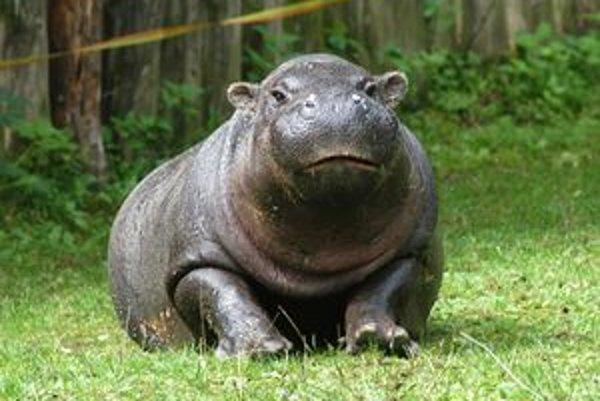 Tak sme ju poznali. Hrošica Žofka robila radosť návštevníkom zoo 12 rokov.