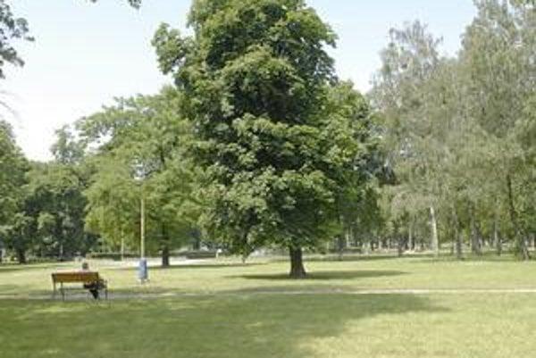 """Mestský park tvorí vstupnú bránu do historického centra mesta, vedie ním hlavný peší ťah k železničnej stanici. Jej potenciál však ostáva nevyužitý. Mnohým Košičanom prekážajú """"štamgasti"""" Mestského parku."""