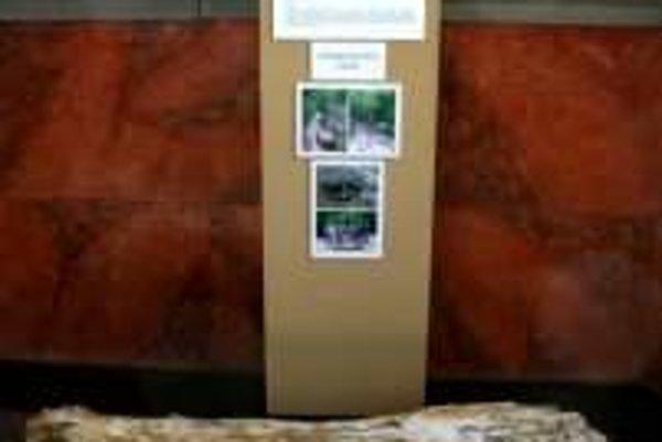 Vzácny nález. Vo foyeri múzea nájdete skamenelé drevo do marca.