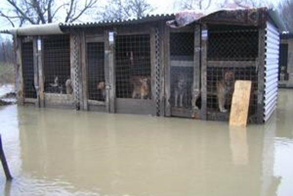 Ohrozené zvieratá. Museli ich premiestniť do bezpečia.