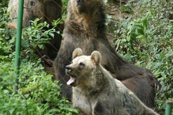 Macov ubudne. Deviatim medveďom je v kavečianskej zoo pritesno. Preto sa rozhodli poskytnúť ich iným záhradám.