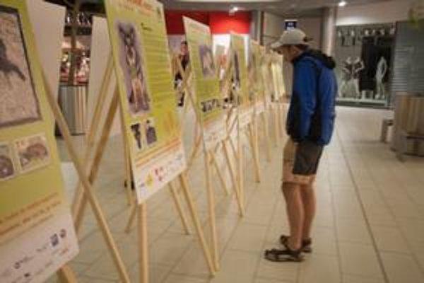 Výzva pomáhať. Výstava poukazuje na aroganciu a nevšímavosť vo vzťahu k zvieratám.