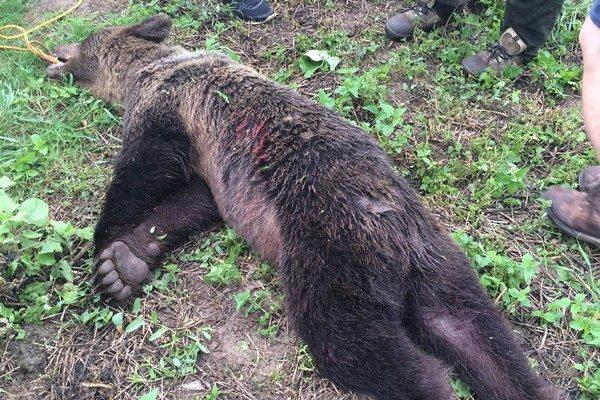 Zastrelená medvedica.