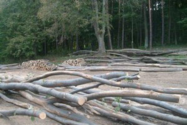Borkút. O palivové drevo z Mestských lesov je záujem.