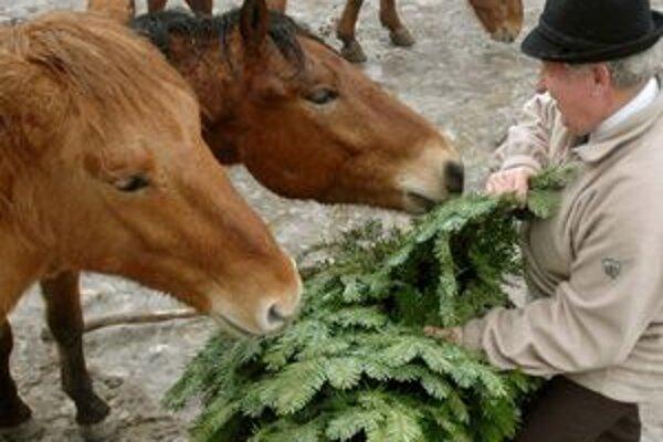 Vianočné stromčeky. Stávajú sa potravou pre zvieratá.