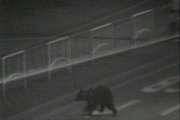 Medveď na najväčšej prešovskej križovatke.