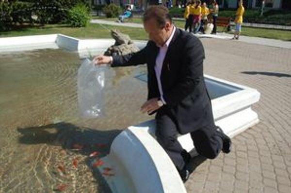 Červené karasy. Aj toto leto plávajú vo fontáne.