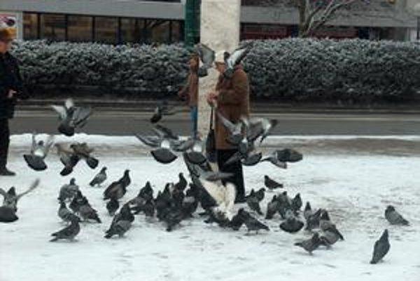 Vtáky majú kŕmičov v obľube. Môžu však prenášať vážne ochorenia.