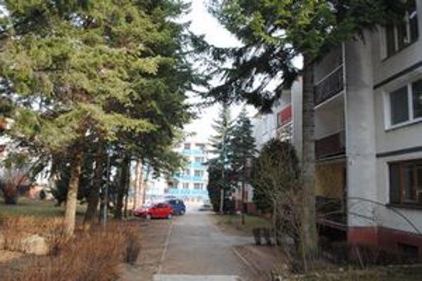 Ulica Marka Čulena. Radnica je rozhodnutá zoťať päť stromov.